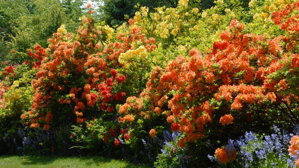 VanDusen Botanical Garden Abloom